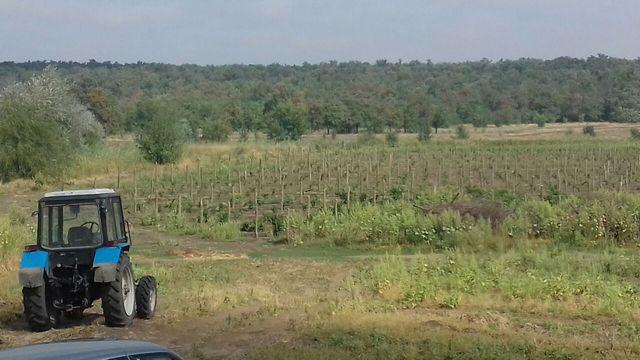 Земельный участок с плодоносящим яблоневым садом на 20 га