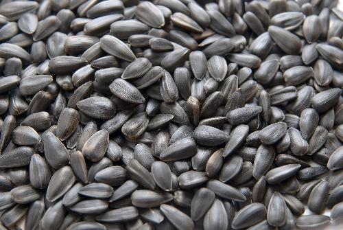 На посевную кампанию семена подсолнечника