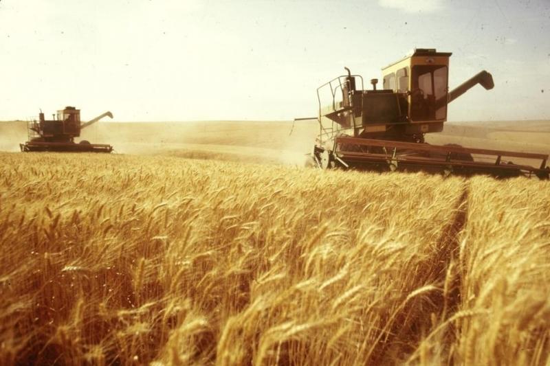 Привлекаем инвестиции, оптовая торговля зерном, экспорт. Урожай 2018.