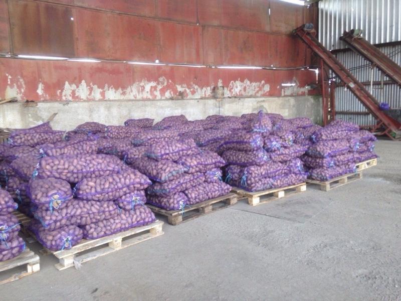 Картофель оптом от производителя
